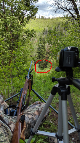 black bear hunting shooting lane