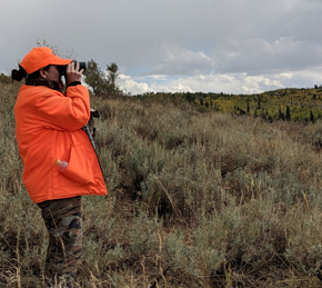 elk hunting glassing for elk
