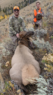 cow elk hunt Utah